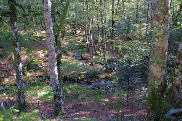 L_Iratiko Erréka dans la Forêt d_Iraty