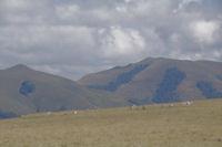 Deux cromlechs a Occabe, au fond, les Pics Mendibel et Chardica