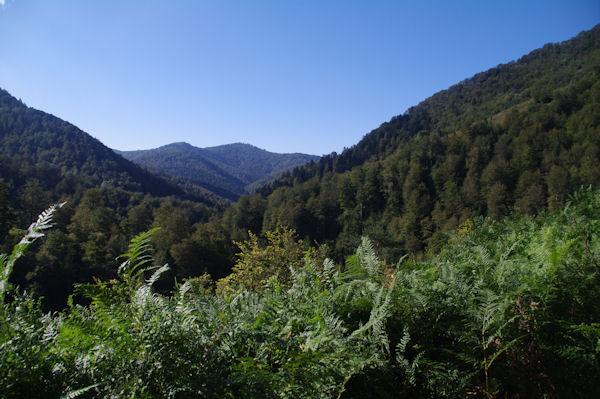 Le vallon de l_Iratiko Erréka dans la forêt d_Iraty