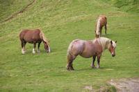 Des chevaux en estive sous le Soum de Grum