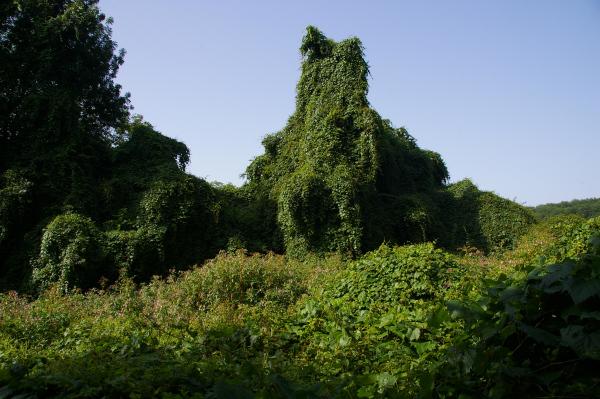 Des arbres fantomatiques après Cavaniès
