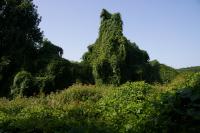 Des arbres fantomatiques apres Cavanies