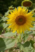 Un peu de soleil a Pailles apres Labastide Marnhac