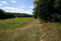 Le Bois de Lagarrigue sur le GR65