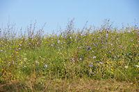 Des fleurs vers Miradoux