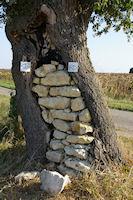Vers Devant Cujon, quand le mur tient l'arbre, a moins que ce ne soit l'inverse…
