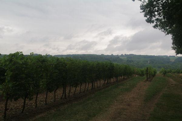 Les vignes vers Bidalère