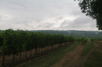 Les vignes vers Bidalere