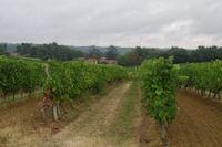 Les vignes vers Basquin