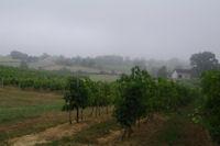 Les vignes gersoises vers Coulau