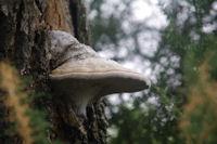 Joli mycelium fongique vers Coulau