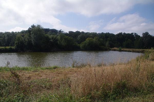 Un étang de l_élevage piscicole du Moulin du Pouy