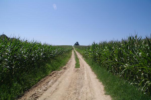 Les maïs vers Belair sur le GR65