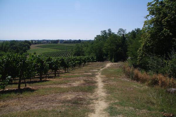 Les vignes vers Pèlevent