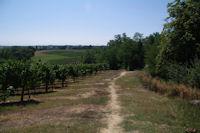 Les vignes vers Pelevent