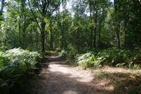 Le GR65 dans les bois a Rigade