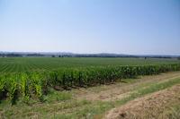 La plaine de l'Adour depuis Manet