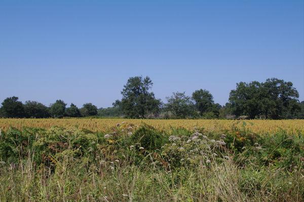La plaine de l_Adour depuis Bourrouillon