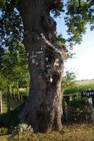 L'arbre des Compostellou vers Mounan