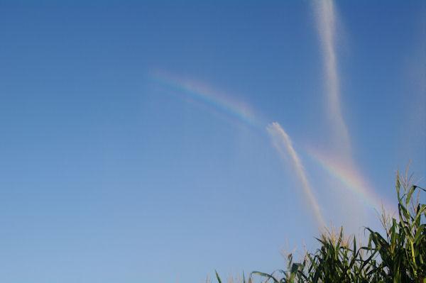 Arc en ciel au milieu des maïs