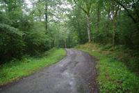 Dans le Bois de Navarrenx