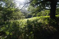 Le GR65 dans le Bois d'Ostabat