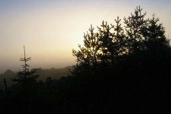 Les Gentianes au petit matin