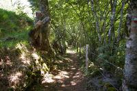 Le chemin descendant sur St Chely d&#39Aubrac