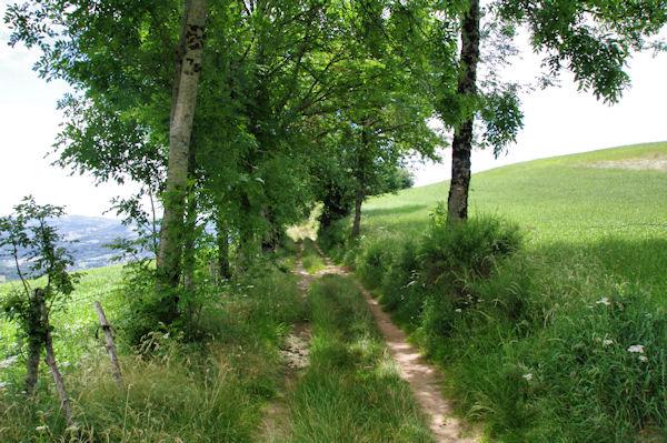 Le GR65 vers Puy de Fraysse