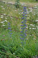 Jolies fleurs sur le GR65 vers La Boriatte