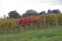 Les vignes vers Terme