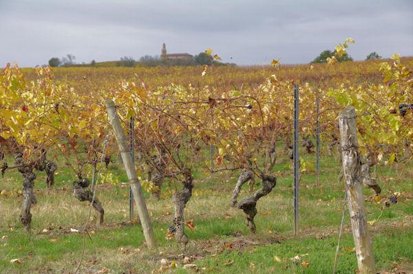 Les vignes vers Les Fortis, au fond, la chapelle de Montegut