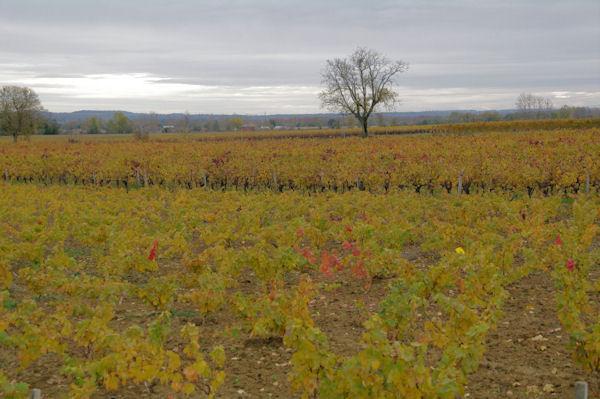 Les vignes vers l_Oustal Nau