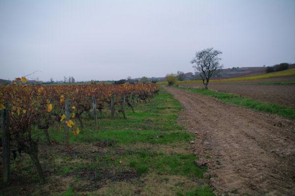 Les vignes vers Guillart