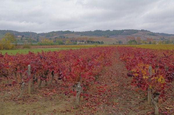 Les vignes du Gaillacois vers Le Pradel