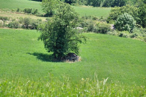 Une cazelle à Cantagrel