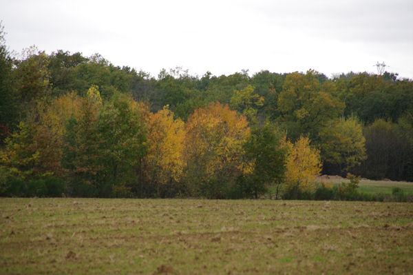 Paysage vers le Bois de l_Hopital