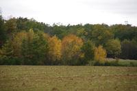 Paysage vers le Bois de l'Hopital