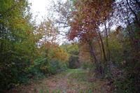 Dans le Bois de la Glaisette