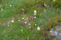 Parterre fleuri sous le refuge Angel Orus