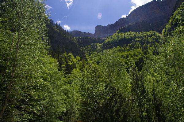 La vallée boisée du rio Arazas