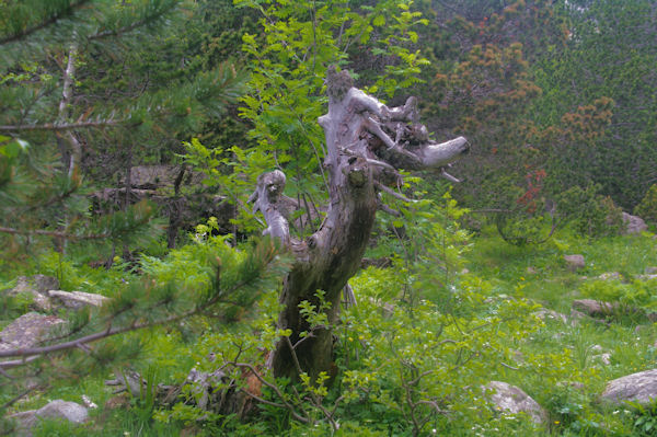 Nature morte vers les Riberetes