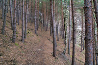 La forêt vers la Font del Ferro