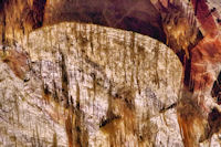 Bénitier dans le gouffre de Cabrespine