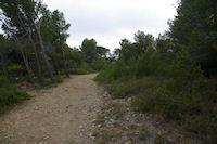 Chemin transversal menant au Rec d'Argent