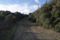 Le chemin remontant vers la chapelle St Julien