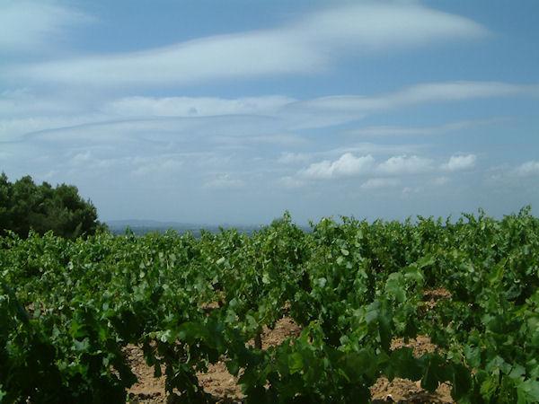 Les vignes au dessus de Capoulade