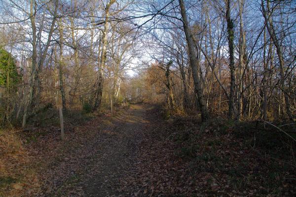 Le chemin montant à Roques
