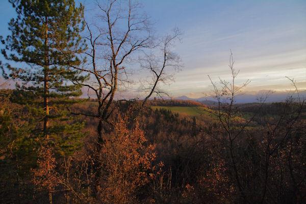 La forêt vers Le Bac