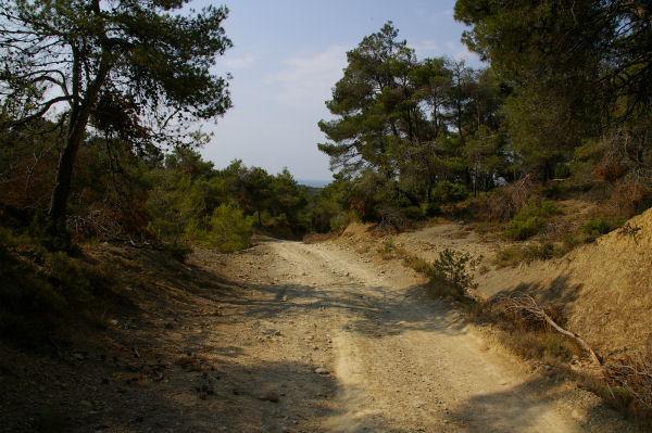 La route forestière qui descend vers Les Abatuts